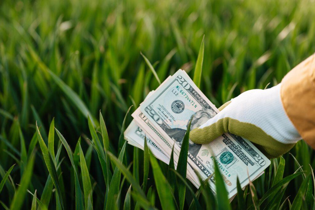 Bild von Geld im Gras